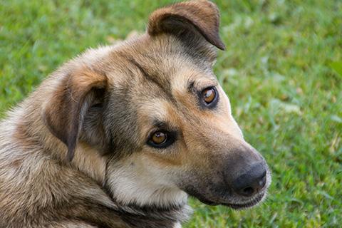 Companion Animal Planning